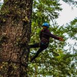 Adult tree climbing