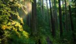 W&E - forest trail credit Robert Graves - horz